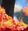 SubliMate (Robyn Hooz) Tags: sublimation sublimazione tronco trunk foglie vapor vapore leaves giardino autunno padova home