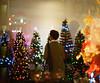merry christmas (andblueorchid) Tags: 35mm analog film fujifilm minoltasrt101 brasil christmas