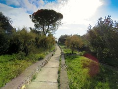 Sigue tu camino (Bonsailara1) Tags: bonsailara1 alberobello puglia italy italia bari park path garden jardin camino