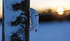 pierced (tsd17) Tags: snow cold bokeh december canon 24105l 6d bromsgrove worcestershire