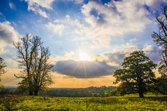 have a glorious Sunday (I was blind now I see!) Tags: landscape skyscape sky trees framed grass colours colourful sun sunny sunlight sunburst sunset clouds cloudscape contrast lighting sunrays rays