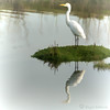 His Own Private Island (Romair) Tags: egret topazsoftware cortemaderamarsh rogerjohnson