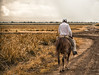Dopo il lavoro, si torna a casa... (Renato Pizzutti) Tags: laromana repubblicadominicana cannadazucchero campi lavoro cavallo contadino coltivatore nikond750 renatopizzutti