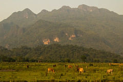 2017_04_21VangVieng9 (Andi [アンデイ]) Tags: laos travel travelphotography street streetphotography seasia southeastasia lao newyear savhannaket vientiane vangvieng luangprabang canon sigma sigmaa nature village rural buddhism