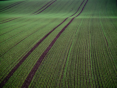 field_lines (Joerg Esper) Tags: plaidt rheinlandpfalz deutschland de feld felder field fields countryside landscape landschaft struktur green grün olympus olympusomdem1 olympusmzuikodigitaled40‑150mm140‑56r