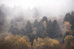 L'ambiance du jour (mrieffly) Tags: automne geishouse hautesvosges hautrhin alsace brouillard epicéas bouleaux