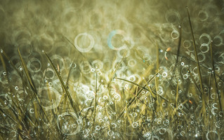 Chaos at grassland