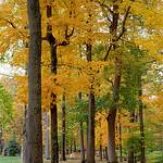 "Cincinnati – Spring Grove Cemetery & Arboretum ""Autumn Trunks"" thumbnail"