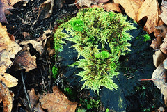 DSC_1881 (FMAG) Tags: 2017 żabieniec zalesie jesien