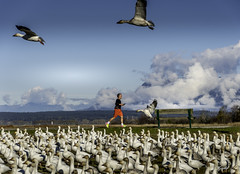 Exercising 鍛煉中 (T.ye) Tags: people cloud clouds sky contrast snow geese goose running excercise run runner