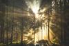 Forest of Light (der_peste) Tags: forest woods woodland raysoflight raysofgod sunrays autumn autumnal mood moody light shadow sunlight sunrise trees leaves