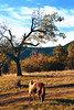 Goat @autumn2017 (Robert Krstevski) Tags: robertkrstevskiblogspotcom robertkrstevski sky goat goats clouds tree trees nature landscape landscapes balkan animal animals photography popular photooftheday photograph photo photographer коза autumn fall autumn2017 fall2017 bush grass macedonia europe makedonija krivapalanka colors есен jesen branches branch forest field