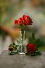 November roses (Inka56) Tags: 7dwf flora roses vase woodtable garden bokeh madeofglass smileonsaturday pentaxm pentaxart