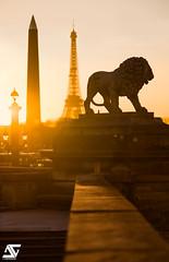 Golden lion (A.G. Photographe) Tags: nikon d850 anto antoxiii xiii ag agphotographe paris parisien parisian france french français europe capitale toureiffel eiffeltower placedelaconcorde lion goldenhour heuredorée louxor obélisque
