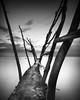 Wooden piles in Savudrija (Aljaž Vidmar | ADesign Studio) Tags: wood longexposure gnd adriaticsea bluehour sunset seascape pole nd4x filter croatia savudrija cokin clouds
