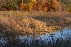 Muted Autumn (NaturalLight) Tags: autumn fall color subtle chisholmcreekpark wichita kansas