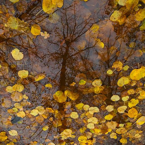 fall - herfst
