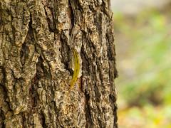 magány (Dreamaxjoe) Tags: animal zoo rabbit goat camel owl tree