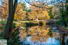 OstPk_DSC9712 (Nick Woods Photography) Tags: landscape water waterscape waterreflections waterscene reflections reflectionsinwater treereflections trees tree autumn autumncolours autumnleaves autumntrees autumnlandscape autumntree osterley osterleypark nationaltrust nt nationaltrustosterleypark