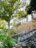 """...I am not afraid to make a mistake, even a great mistake, a lifelong mistake and perhaps as long as eternity too."" ―James Joyce 🇪🇸 🌴 (anokarina) Tags: casioexz120 santaponsa balearicislands spain majorca mallorca españa calvià palma trees flowers stone wall design classic historic illesbalears islasbaleares mediterraneansea marbalear elmarbalear"
