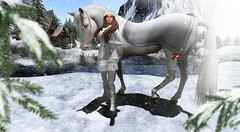 Let it snow (meriluu17) Tags: horse jinx blanket winter walk snow snowing letitsnow winterland white sweet river ice frost breath whr