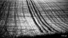 TERRE-1 (FLOCVROFF) Tags: autumn champs terre nature 250mm noir et blanc monochrome grain