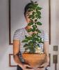 505 House Plant (Katrina Yu) Tags: house plant surreal dream selfportrait 2017 365project sunlight conceptual creative concept art artsy manipulation