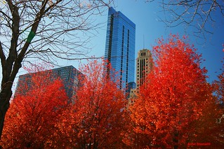 Fall colors in Downtown Chicago.
