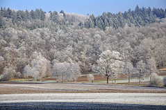 DSC 6147 (Charli 49) Tags: charli nature naturfotografie landschaft landscape feld und wald winter raureif
