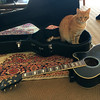 In the guitar case again.. (rjmiller1807) Tags: cat guitar case ibanez guitarcase kitty ginger gingercat meow purr cute carpet 2017 iphone iphonography iphonese