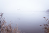 foggy afternoon (soundmoods) Tags: goose flying mist fog canon 6d 24105mm thenetherlands water atmosphere minimal