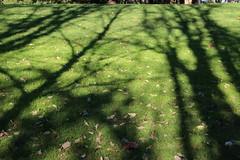 Afternoon shadows (nikname) Tags: trees roodbridgepark hillsboroor stateparks urbanparks