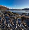 Pick up sticks (Traylor Photography) Tags: alaska mountains winter tide birdpoint driftwood turnagainarm sewardhighway anchorage unitedstates us