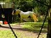 Go away, I'm on my hay-break (Nanny Bean) Tags: workinghorses forestry timberleading harness haynet