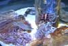 Tampa, FL - Florida Aquarium - Bays and Beaches (jrozwado) Tags: northamerica usa florida tampa aquarium fish urchin echinoderm
