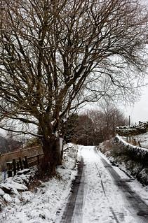 Snow Laden Bethany Lane