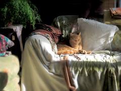 Mamma's corner (Ani Carrington) Tags: tabby ginger gingercat light room couch sofa stilllife stillife asleep orangecat