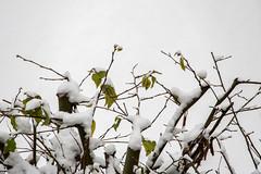 erster Schnee (p.schmal) Tags: olympuspenf hamburg farmsenberne schnee