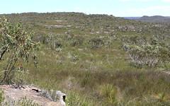 Yellow Top Mallee Ash (Poytr) Tags: mallee eucalyptus eucalyptusluehmanniana kuringgaichasenationalpark terreyhills yellowtopmalleeash rareplant rare heath hawkesburysandstone sandstone tree