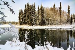 Reflections (Dan King Alaskan Photography) Tags: winter spruce reflection scenic canon50d sigma1224mm tworiversalaska