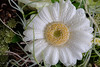 Blümchen (uhu's pics) Tags: nature natur softly agréable lovely sanft lieblich vert green jaune yellow blanc white grün gelb weiss blossom blüte fleur flower blume 90mm xpro2 xpro fujinon fuji fujifilm