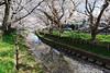 DSC01757 (維尼賈許) Tags: 2017tokyotrip a7m2 day6 fe28mmf2 japan 埼玉県 川越市 kawagoeshi saitamaken 日本 jp