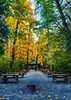 Lunch Room (flashfix) Tags: october242017 2017inphotos victoria bc britishcolumbia canada nikond7100 nikon goldstreampark nature leaves moss sunlight forest bokeh yellow green branches woods 28mm landscape picnictables picnic firepit panorama trees flashfix flashfixphotography