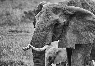 Stop Hunting Elephants!