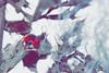 IMG_012249 - Wake me up in spring! (Monique van Gompel) Tags: natuur nature 7dwf macrofotografie macrophotography tamronsp90mmf28dimacro11vcusd tamronsp90mm ladybug ladybird lieveheersbeestje hibernate overwinteren cold grey naturephotography natuurfotografie outside