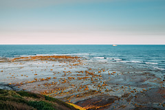 Long Reef Point (haoguoju) Tags: landscape australia nsw newsouthwales sydney winter outdoor a7m2 a7 sony sonya7markii sonyilce7m2 fe bushwalking hiking mountain fe1635mmf4zaoss 1635mmf4 1635mm f4 coastalwalk zeiss zeiss1635mmf4 longreefpoint longreefpointlookout sea variotessar vario tessar ocean cliff grass longreefpointwalk golfcourse sunset blue green seascape ship