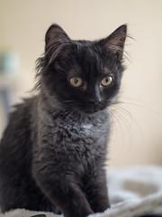 Mona (lauriepetsitterparis) Tags: mona chatte minette minou mingon miaou catsitter cat cute chatonne chaton