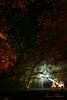 A ray of sparkle on a dark night ... (Lauren Taliana) Tags: nightshot longexposure enchantedwoods enchanted syonhouseenchantedgardens syonhouse trees bright colour color lights light dark nikon nikkor flickr night elements
