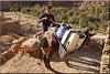 transport (mhobl) Tags: donkey amtoudi maroc morocco esel transport luggage