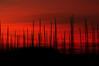 Alberi (luporosso) Tags: alberi albero trees mare sea barca vela barcaavela sailboat red sky cielo silhouette siluetas abigfave